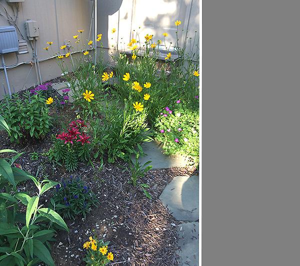 Cutting Garden in May 2
