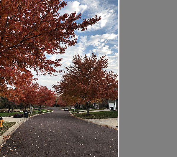 Fall on Our Street