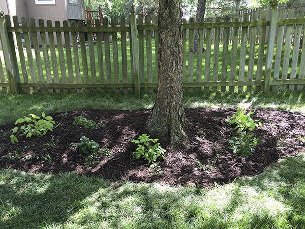 Shade Garden After