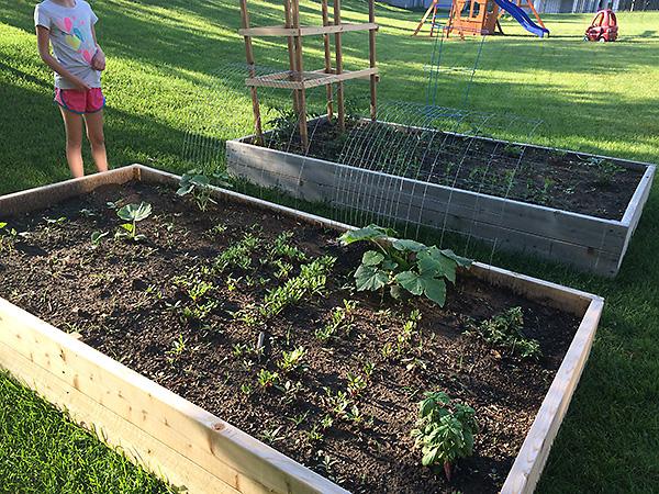 Vegetable Garden in May