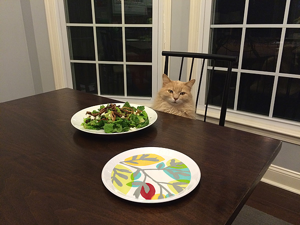 Darby ready for dinner